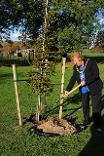 Councillor Pinkerton planting a tree at Centenary Wood