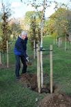 Councillor Sider planting a tree at Centenary Wood