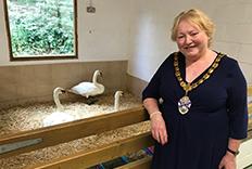 Mayor at the Swan Sanctuary