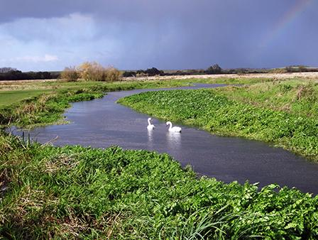 Staines Moor Displays a larger version of this image in a new browser window