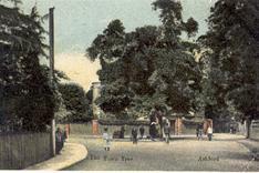 The Town Tree, Ashford